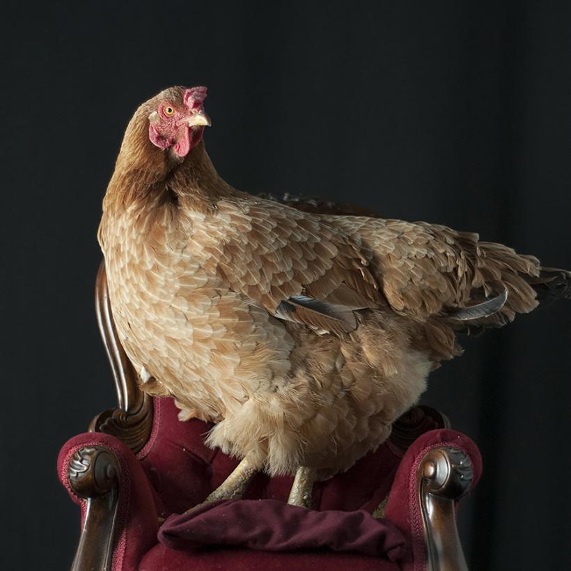 maria-bodega-gallina
